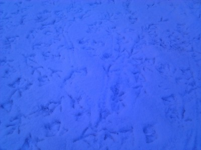 Bird feet in the snow